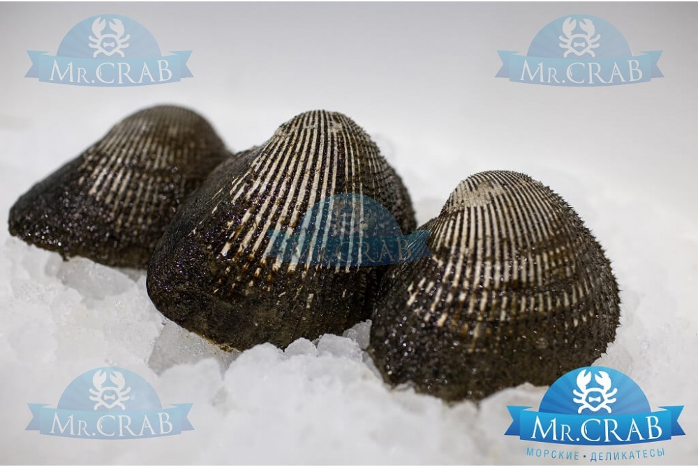 Анадара моллюск живой, 500 г